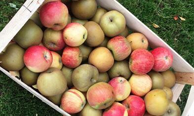 C'est la saison des pommes !