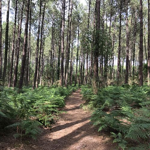 La forêt bienfaisante